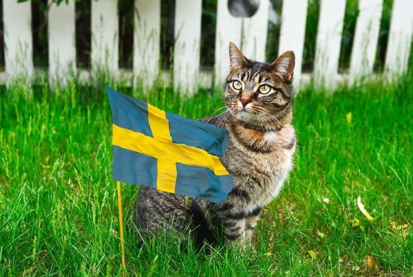 В Швеции права кошек и собак