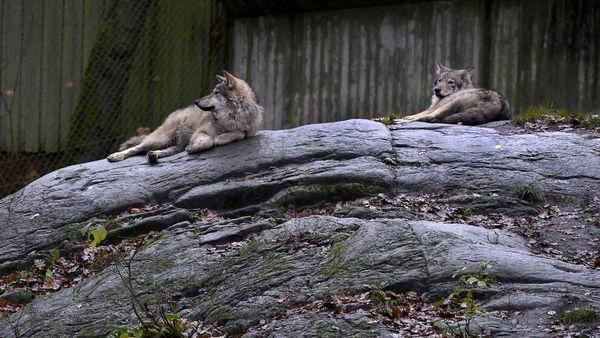 В шведском зоопарке